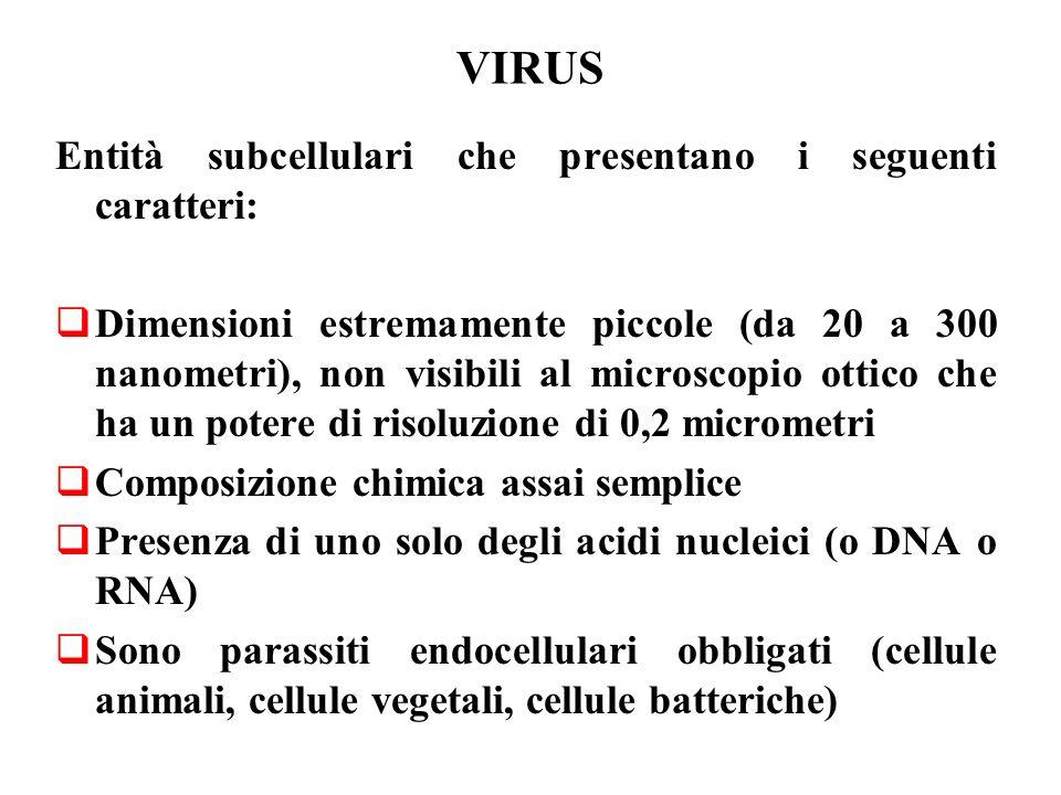 VIRUS Entità subcellulari che presentano i seguenti caratteri:  Dimensioni estremamente piccole (da 20 a 300 nanometri), non visibili al microscopio