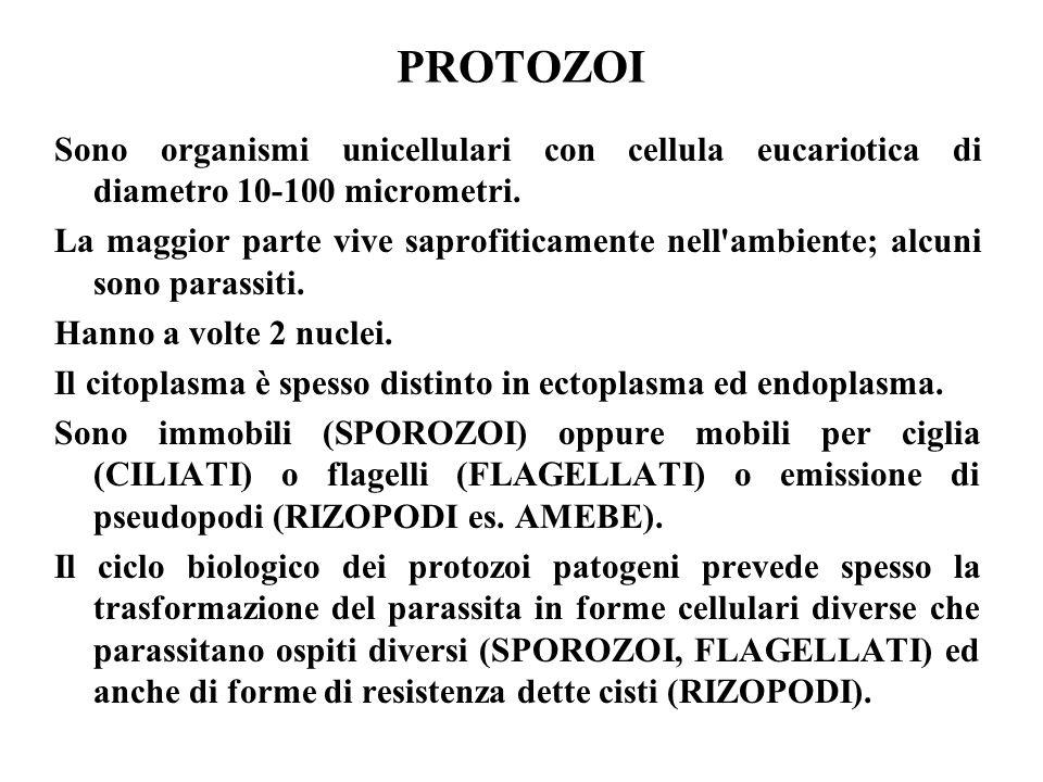 PROTOZOI Sono organismi unicellulari con cellula eucariotica di diametro 10-100 micrometri. La maggior parte vive saprofiticamente nell'ambiente; alcu
