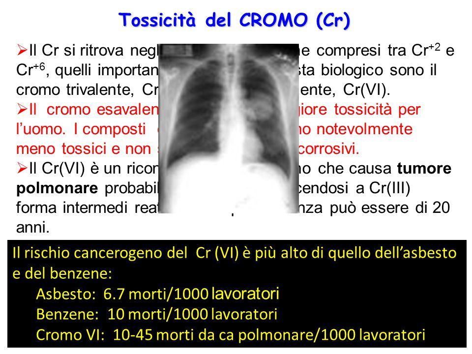 Tossicità del CROMO (Cr)  Il Cr si ritrova negli stadi di ossidazione compresi tra Cr +2 e Cr +6, quelli importanti da un punto di vista biologico so