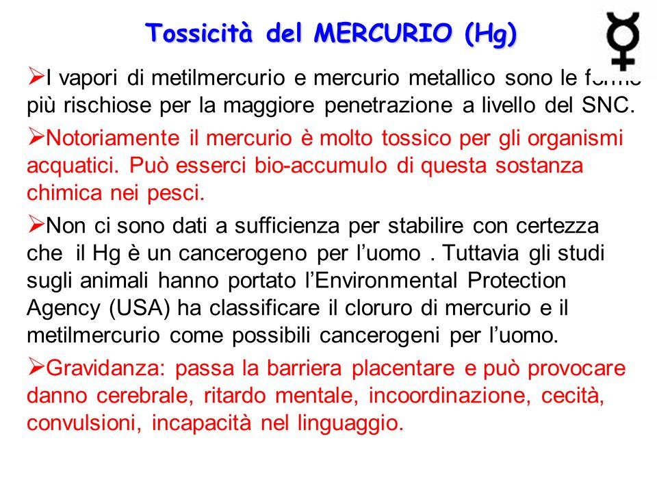 Tossicità del MERCURIO (Hg)  I vapori di metilmercurio e mercurio metallico sono le forme più rischiose per la maggiore penetrazione a livello del SN