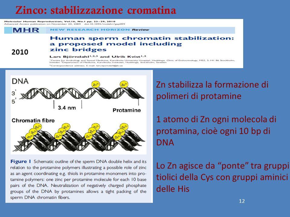 """12 Zn stabilizza la formazione di polimeri di protamine 1 atomo di Zn ogni molecola di protamina, cioè ogni 10 bp di DNA Lo Zn agisce da """"ponte"""" tra g"""