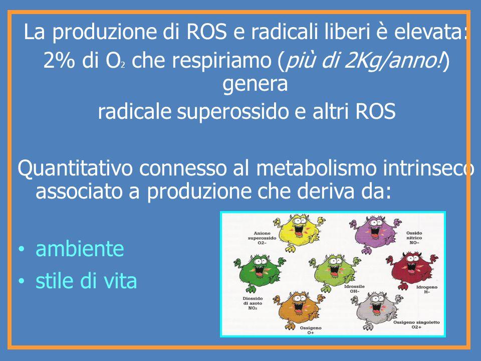 La produzione di ROS e radicali liberi è elevata: 2% di O 2 che respiriamo (più di 2Kg/anno!) genera radicale superossido e altri ROS Quantitativo con