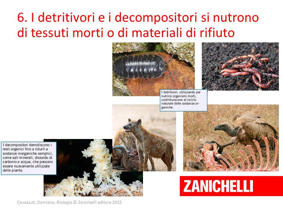 Cavazzuti, Damiano, Biologia © Zanichelli editore 2015 6. I detritivori e i decompositori si nutrono di tessuti morti o di materiali di rifiuto