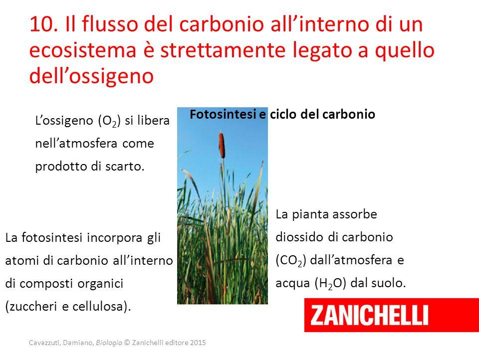 Cavazzuti, Damiano, Biologia © Zanichelli editore 2015 10. Il flusso del carbonio all'interno di un ecosistema è strettamente legato a quello dell'oss