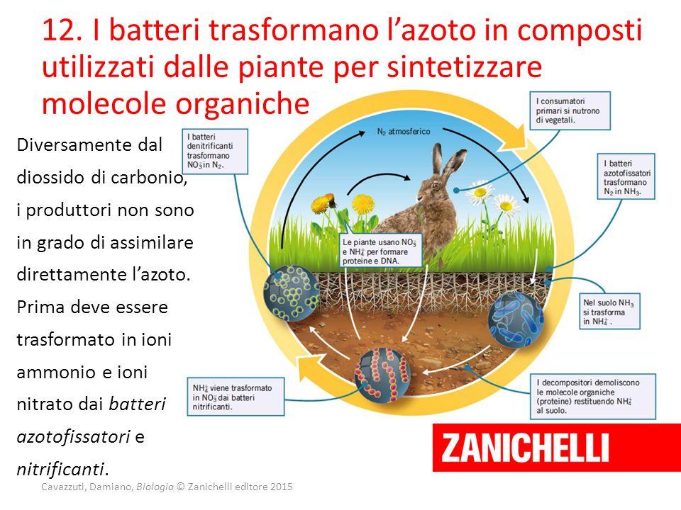 Cavazzuti, Damiano, Biologia © Zanichelli editore 2015 12. I batteri trasformano l'azoto in composti utilizzati dalle piante per sintetizzare molecole