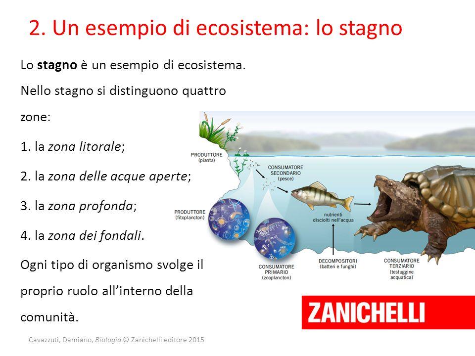 Cavazzuti, Damiano, Biologia © Zanichelli editore 2015 2. Un esempio di ecosistema: lo stagno Lo stagno è un esempio di ecosistema. Nello stagno si di
