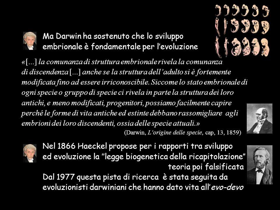 Ma Darwin ha sostenuto che lo sviluppo embrionale è fondamentale per l'evoluzione «[...] la comunanza di struttura embrionale rivela la comunanza di d