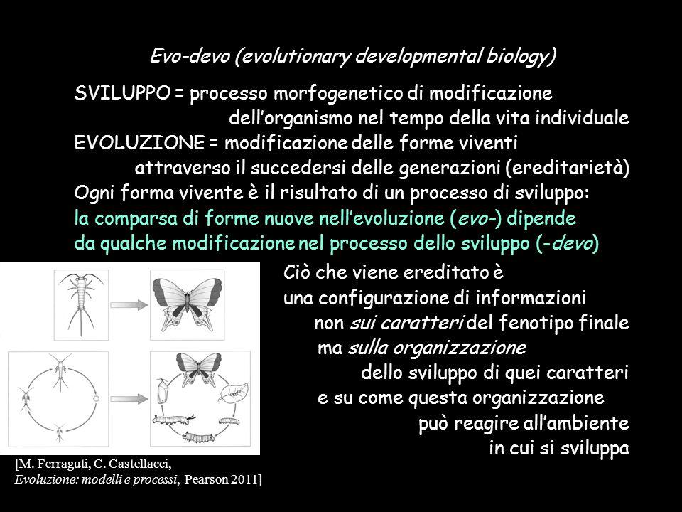 Ciò che viene ereditato è una configurazione di informazioni non sui caratteri del fenotipo finale ma sulla organizzazione dello sviluppo di quei cara