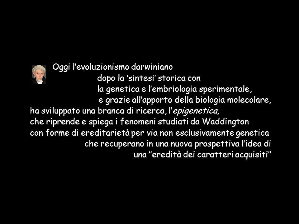 Oggi l'evoluzionismo darwiniano dopo la 'sintesi' storica con la genetica e l'embriologia sperimentale, e grazie all'apporto della biologia molecolare