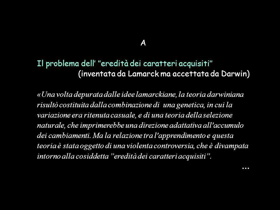 A Il problema dell' ''eredità dei caratteri acquisiti'' (inventata da Lamarck ma accettata da Darwin) «Una volta depurata dalle idee lamarckiane, la t