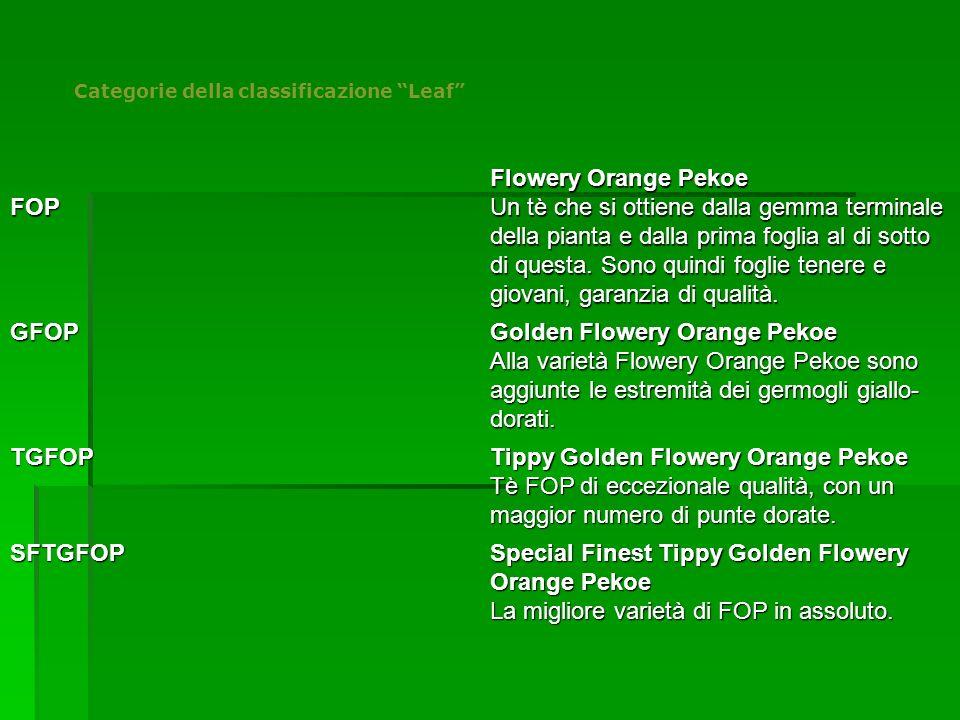 """Categorie della classificazione """"Leaf"""" FOP Flowery Orange Pekoe Un tè che si ottiene dalla gemma terminale della pianta e dalla prima foglia al di sot"""