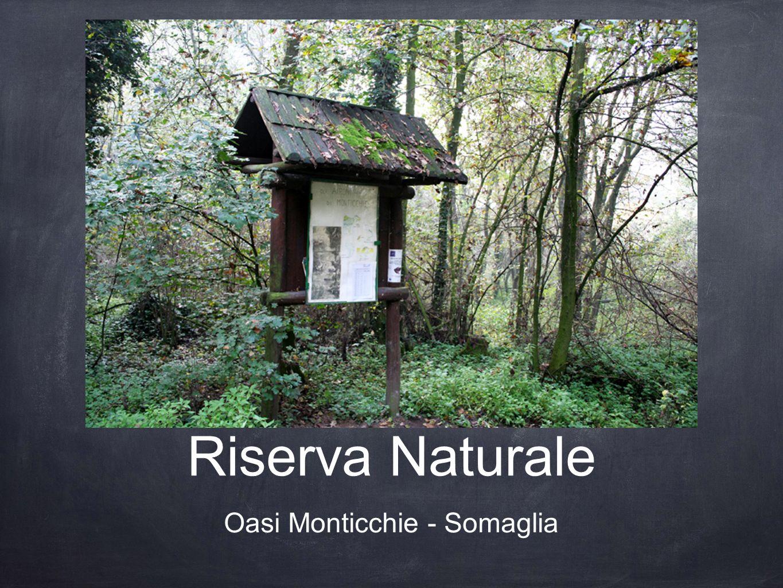 Riserva Naturale Oasi Monticchie - Somaglia