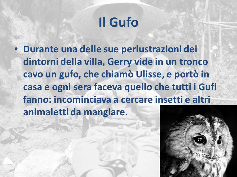 Il Gufo Durante una delle sue perlustrazioni dei dintorni della villa, Gerry vide in un tronco cavo un gufo, che chiamò Ulisse, e portò in casa e ogni