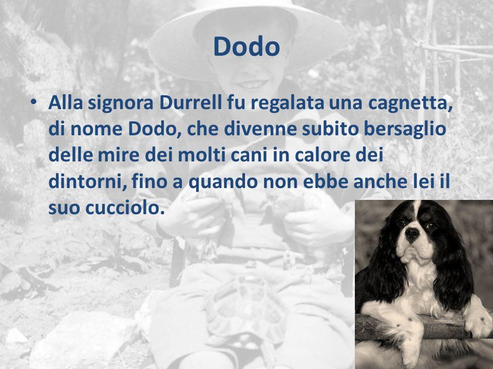 Dodo Alla signora Durrell fu regalata una cagnetta, di nome Dodo, che divenne subito bersaglio delle mire dei molti cani in calore dei dintorni, fino