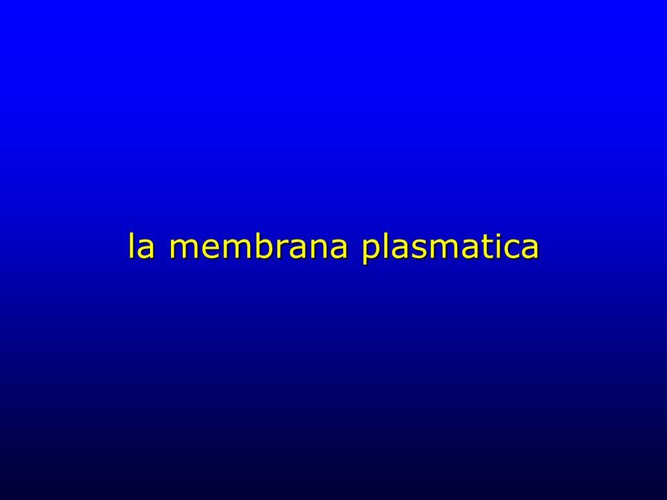 la membrana plasmatica