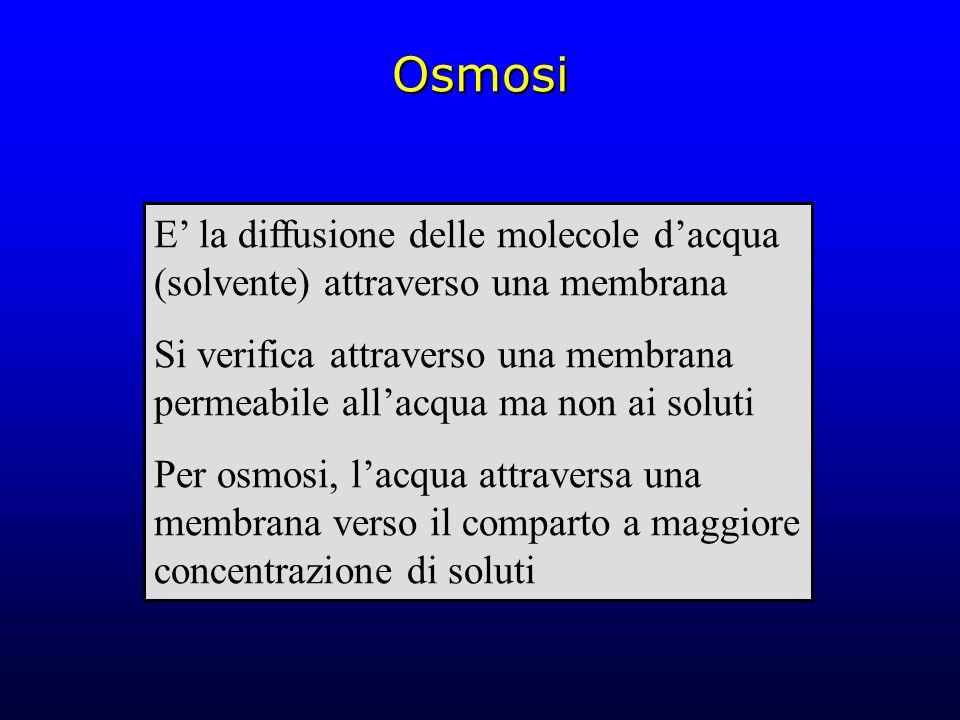 Osmosi E' la diffusione delle molecole d'acqua (solvente) attraverso una membrana Si verifica attraverso una membrana permeabile all'acqua ma non ai s