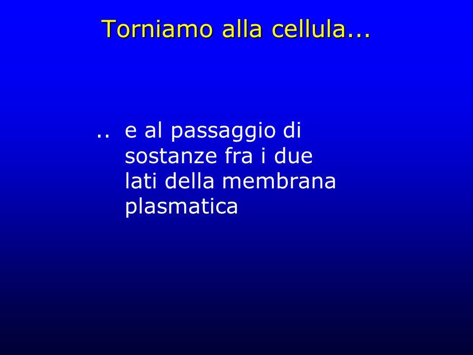 Torniamo alla cellula.....e al passaggio di sostanze fra i due lati della membrana plasmatica