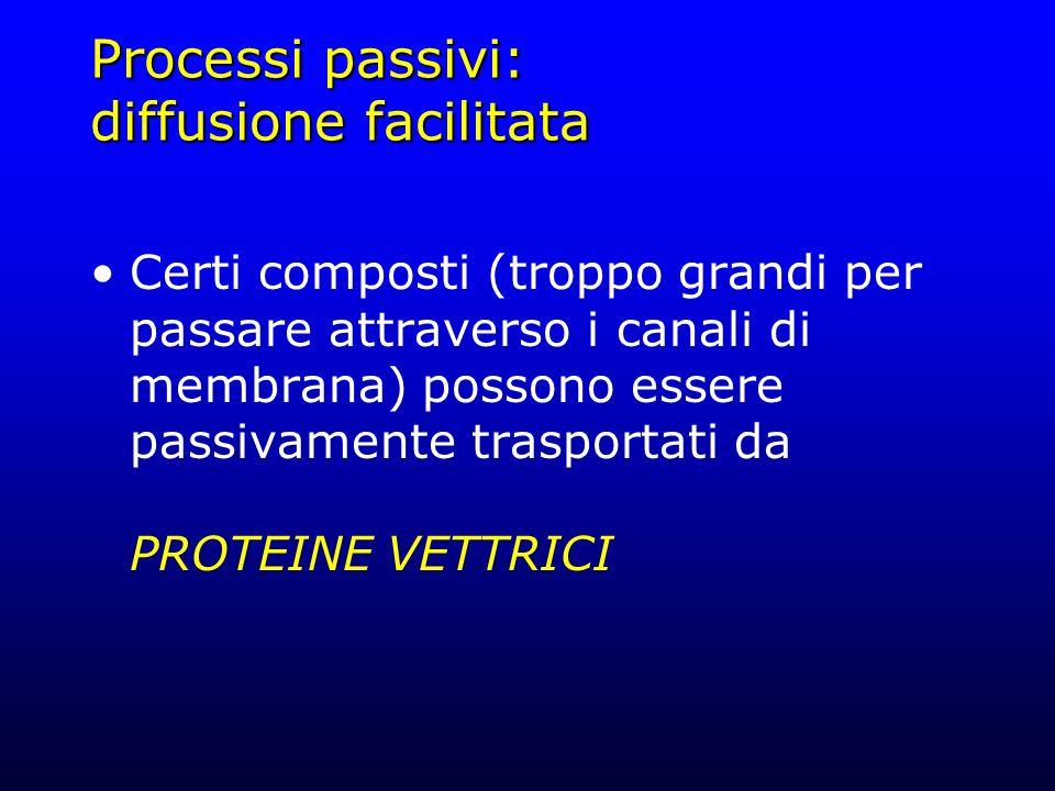Processi passivi: diffusione facilitata Certi composti (troppo grandi per passare attraverso i canali di membrana) possono essere passivamente traspor