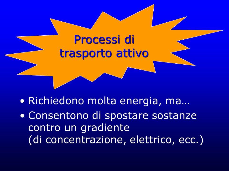 Richiedono molta energia, ma… Consentono di spostare sostanze contro un gradiente (di concentrazione, elettrico, ecc.) Processi di trasporto attivo