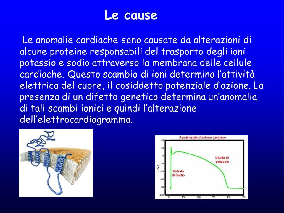 Le anomalie cardiache sono causate da alterazioni di alcune proteine responsabili del trasporto degli ioni potassio e sodio attraverso la membrana del