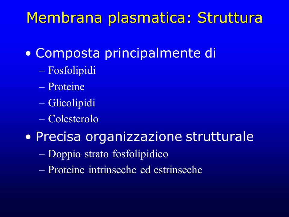 Membrana plasmatica: Struttura Composta principalmente di –Fosfolipidi –Proteine –Glicolipidi –Colesterolo Precisa organizzazione strutturale –Doppio