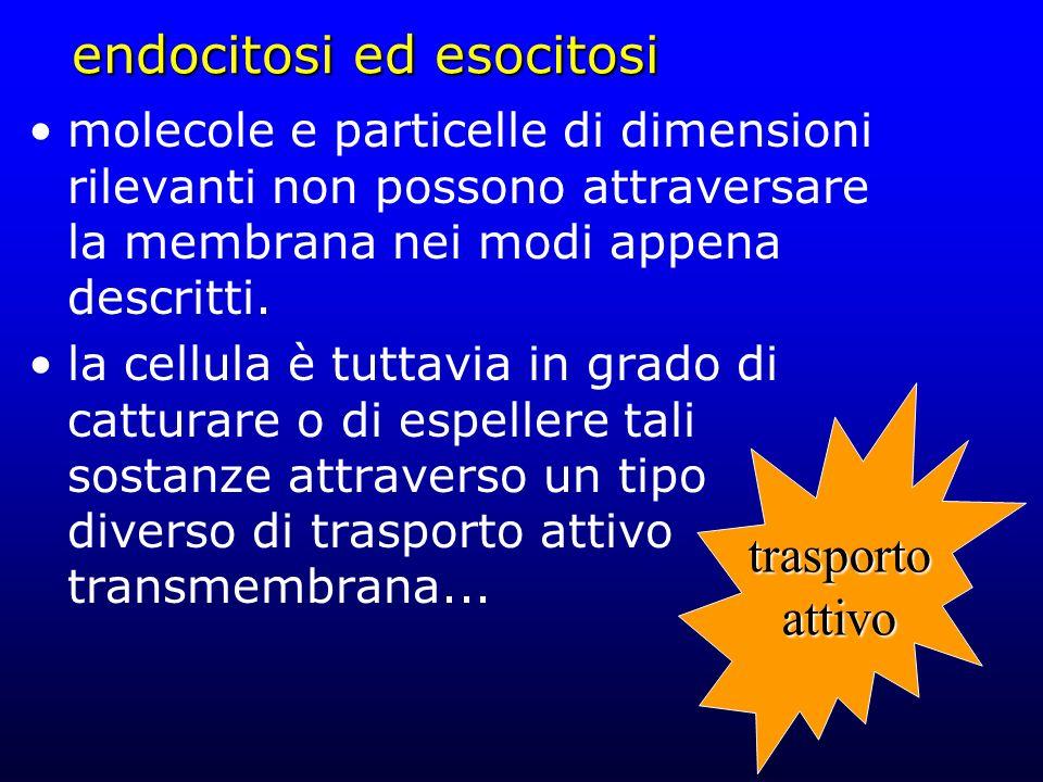 endocitosi ed esocitosi molecole e particelle di dimensioni rilevanti non possono attraversare la membrana nei modi appena descritti. la cellula è tut