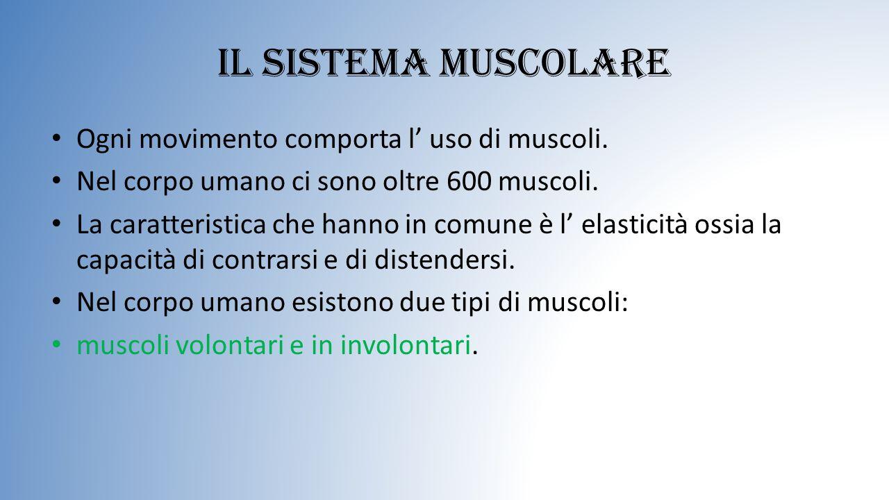 Il sistema muscolare Ogni movimento comporta l' uso di muscoli. Nel corpo umano ci sono oltre 600 muscoli. La caratteristica che hanno in comune è l'
