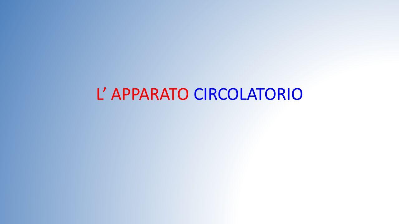 L' APPARATO CIRCOLATORIO