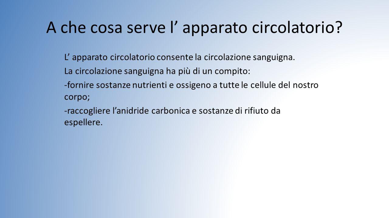 A che cosa serve l' apparato circolatorio? L' apparato circolatorio consente la circolazione sanguigna. La circolazione sanguigna ha più di un compito