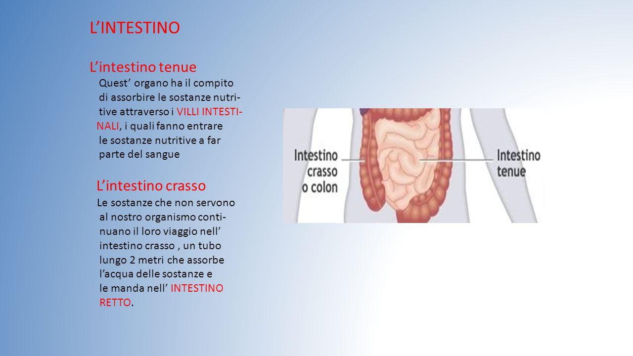 L'INTESTINO L'intestino tenue Quest' organo ha il compito di assorbire le sostanze nutri- tive attraverso i VILLI INTESTI- NALI, i quali fanno entrare