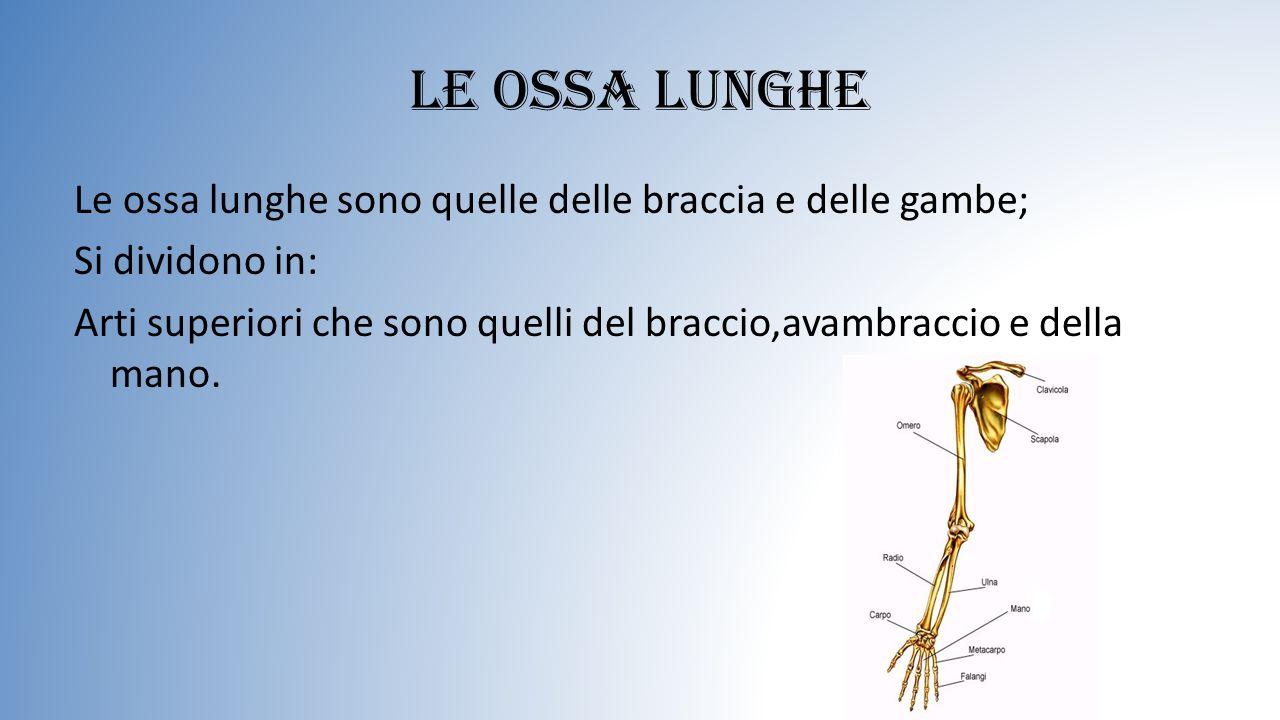 Le ossa lunghe Le ossa lunghe sono quelle delle braccia e delle gambe; Si dividono in: Arti superiori che sono quelli del braccio,avambraccio e della