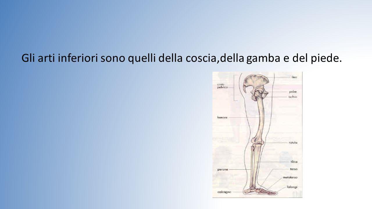 Le ossa piatte Per ossa piatte si intendono quelle del cranio(della testa);che comprende la Mascella e la Mandibola.