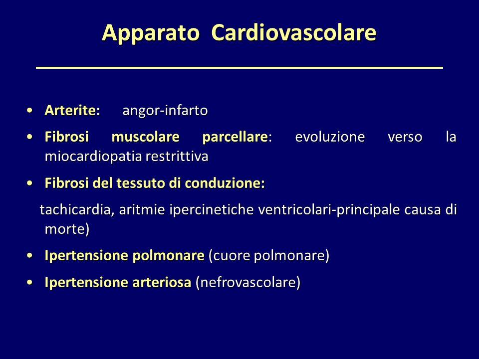 Apparato Cardiovascolare Arterite: angor-infartoArterite: angor-infarto Fibrosi muscolare parcellare: evoluzione verso la miocardiopatia restrittivaFi