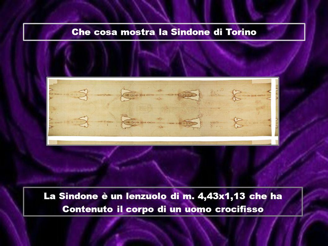 Che cosa mostra la Sindone di Torino La Sindone è un lenzuolo di m. 4,43x1,13 che ha Contenuto il corpo di un uomo crocifisso