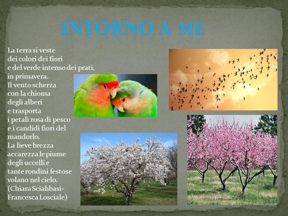 La terra si veste dei colori dei fiori e del verde intenso dei prati, in primavera. Il vento scherza con la chioma degli alberi e trasporta i petali r