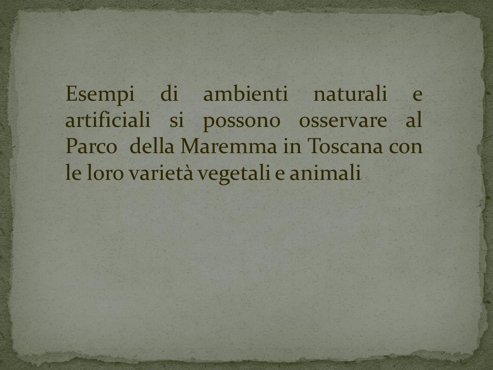 Esempi di ambienti naturali e artificiali si possono osservare al Parco della Maremma in Toscana con le loro varietà vegetali e animali