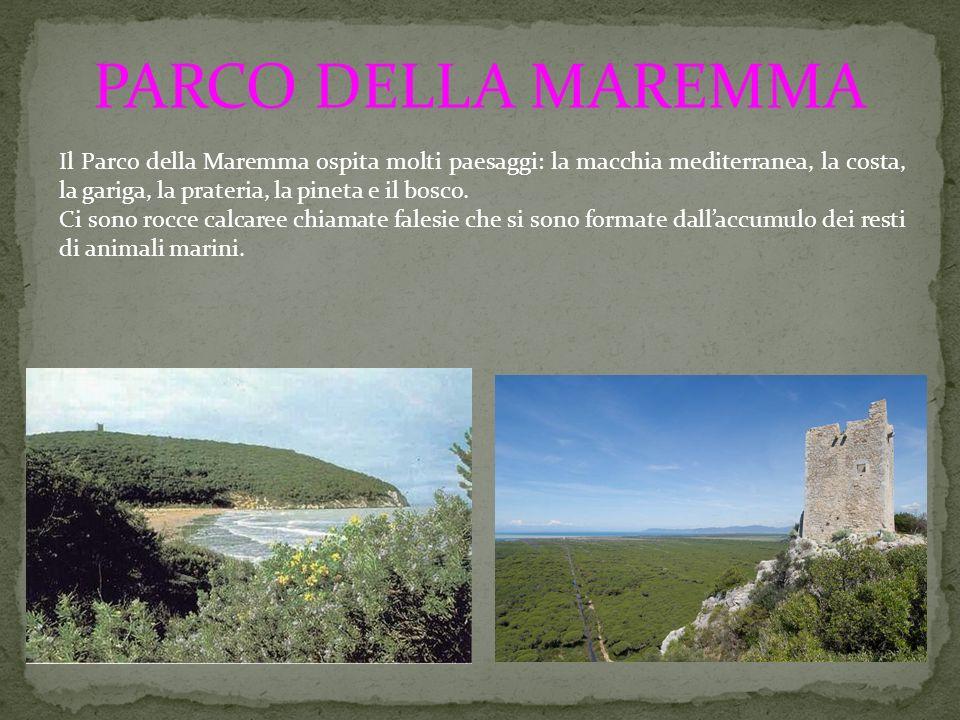 PARCO DELLA MAREMMA Il Parco della Maremma ospita molti paesaggi: la macchia mediterranea, la costa, la gariga, la prateria, la pineta e il bosco. Ci