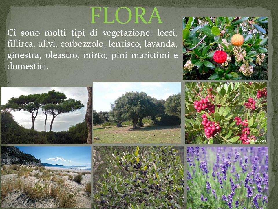 Ci sono molti tipi di vegetazione: lecci, fillirea, ulivi, corbezzolo, lentisco, lavanda, ginestra, oleastro, mirto, pini marittimi e domestici. FLORA
