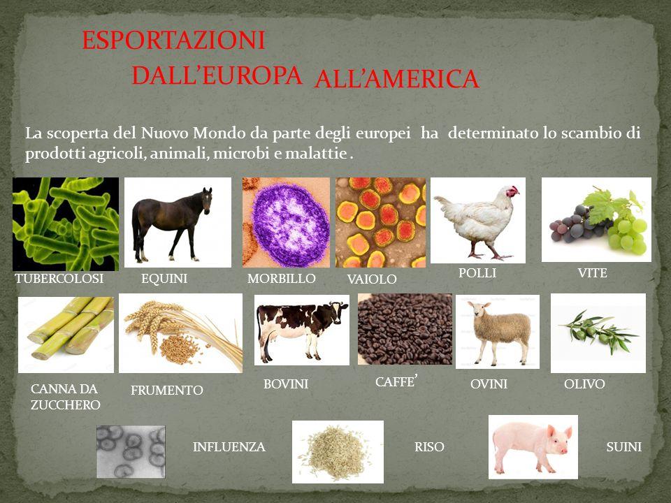 ESPORTAZIONI DALL'EUROPA La scoperta del Nuovo Mondo da parte degli europei ha determinato lo scambio di prodotti agricoli, animali, microbi e malatti