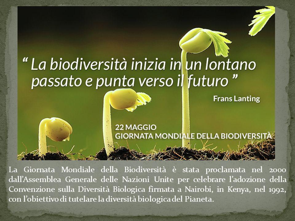 La Giornata Mondiale della Biodiversità è stata proclamata nel 2000 dall'Assemblea Generale delle Nazioni Unite per celebrare l'adozione della Convenz