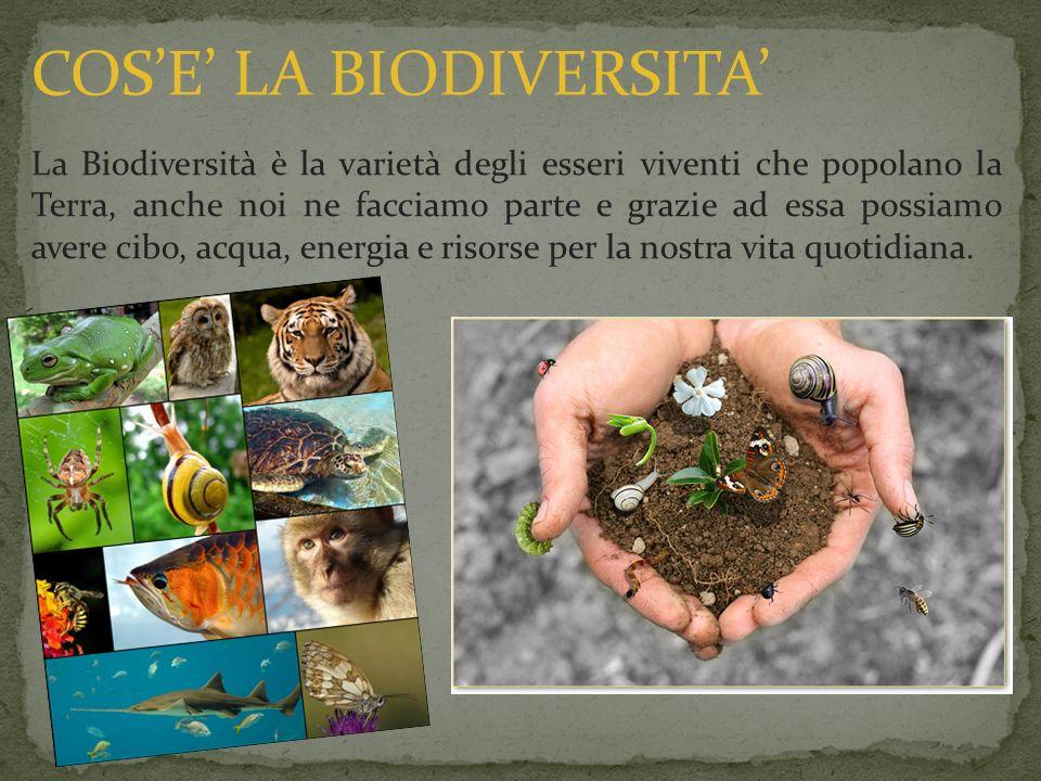 La Biodiversità è la varietà degli esseri viventi che popolano la Terra, anche noi ne facciamo parte e grazie ad essa possiamo avere cibo, acqua, ener