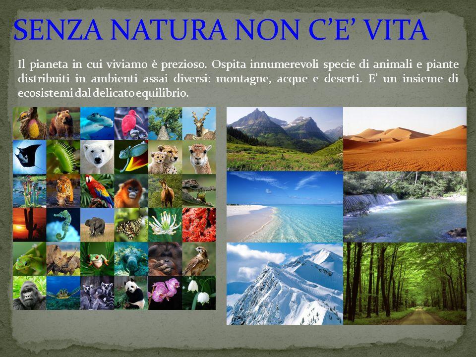SENZA NATURA NON C'E' VITA Il pianeta in cui viviamo è prezioso. Ospita innumerevoli specie di animali e piante distribuiti in ambienti assai diversi: