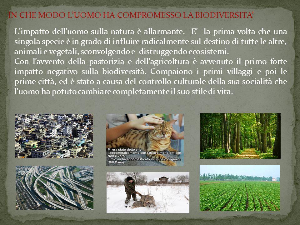 L'impatto dell'uomo sulla natura è allarmante. E' la prima volta che una singola specie è in grado di influire radicalmente sul destino di tutte le al
