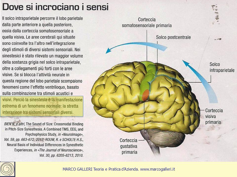 13 MARCO GALLERI Teoria e Pratica d'Azienda. www.marcogalleri.it