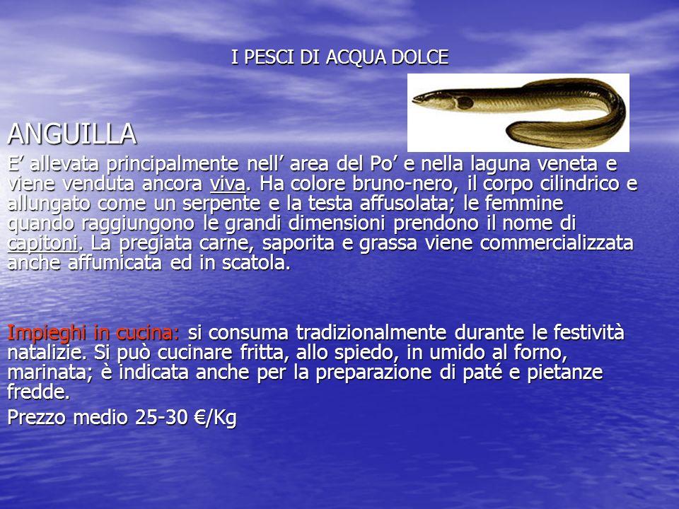 I PESCI DI ACQUA DOLCE ANGUILLA E' allevata principalmente nell' area del Po' e nella laguna veneta e viene venduta ancora viva.