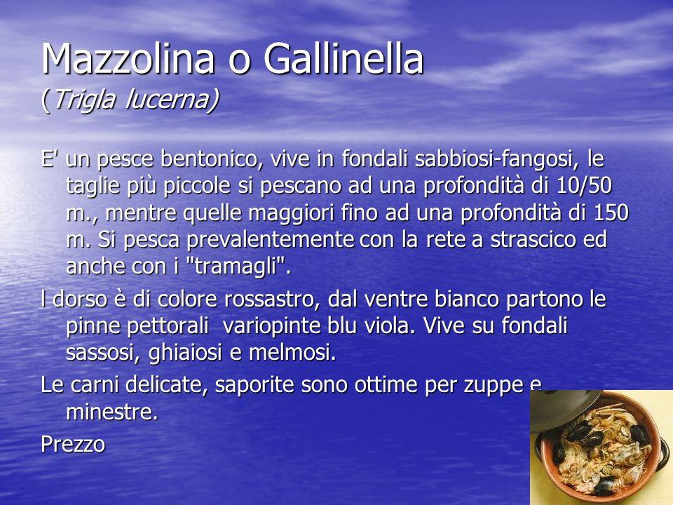 Mazzolina o Gallinella (Trigla lucerna) E un pesce bentonico, vive in fondali sabbiosi-fangosi, le taglie più piccole si pescano ad una profondità di 10/50 m., mentre quelle maggiori fino ad una profondità di 150 m.