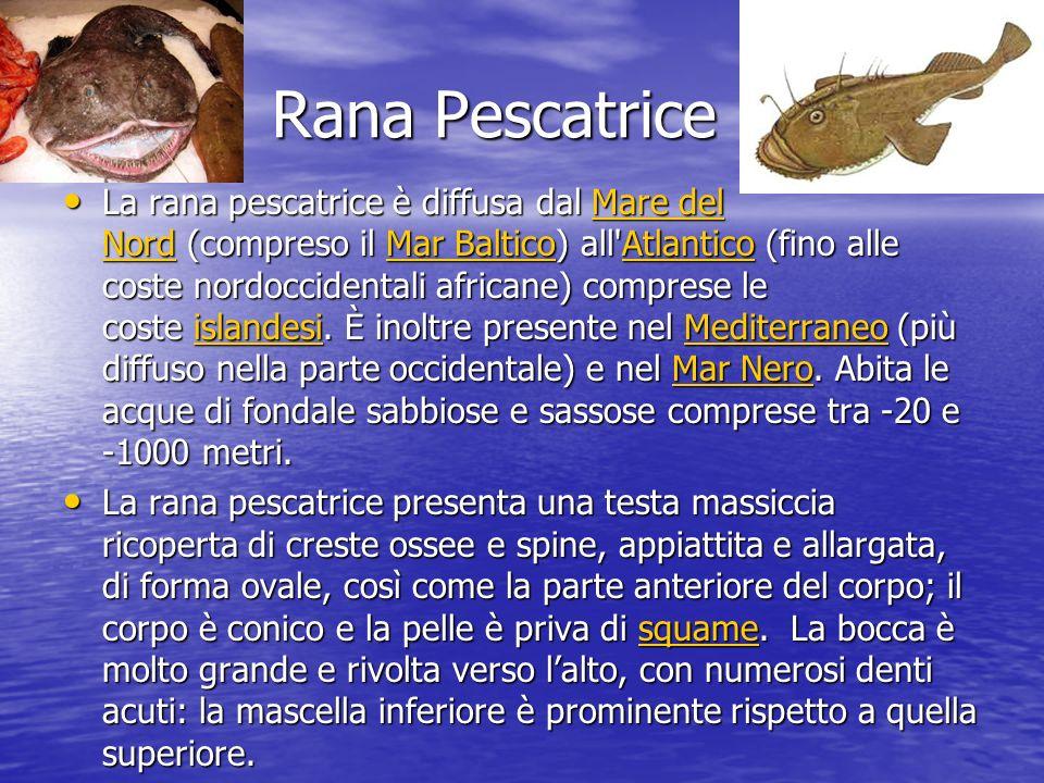 Rana Pescatrice La rana pescatrice è diffusa dal Mare del Nord (compreso il Mar Baltico) all Atlantico (fino alle coste nordoccidentali africane) comprese le coste islandesi.