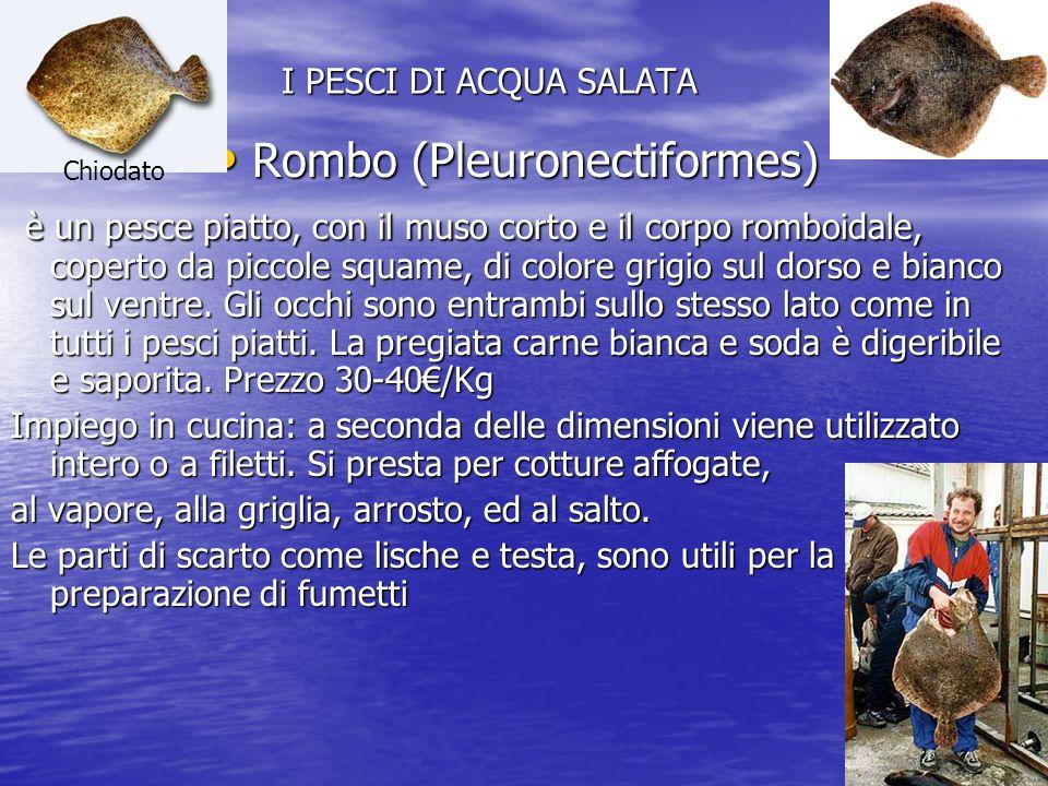 I PESCI DI ACQUA SALATA Rombo (Pleuronectiformes) Rombo (Pleuronectiformes) è un pesce piatto, con il muso corto e il corpo romboidale, coperto da piccole squame, di colore grigio sul dorso e bianco sul ventre.