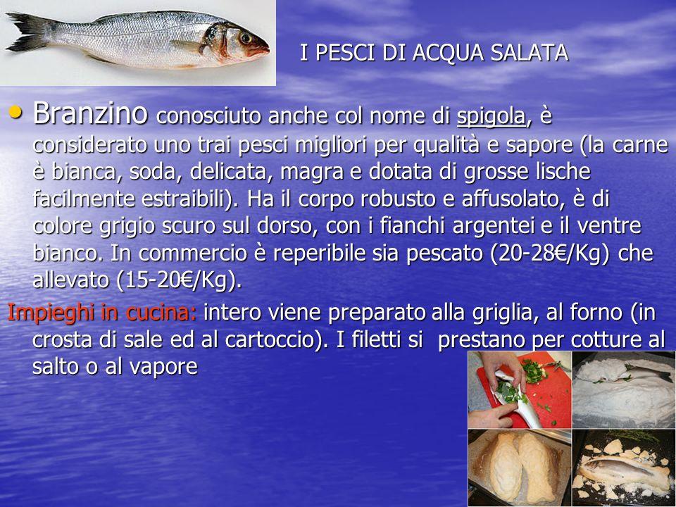 I PESCI DI ACQUA SALATA Branzino conosciuto anche col nome di spigola, è considerato uno trai pesci migliori per qualità e sapore (la carne è bianca, soda, delicata, magra e dotata di grosse lische facilmente estraibili).