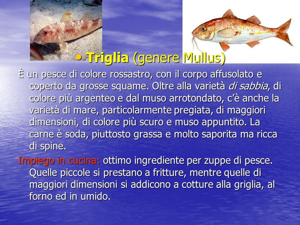 Triglia (genere Mullus) Triglia (genere Mullus) È un pesce di colore rossastro, con il corpo affusolato e coperto da grosse squame.